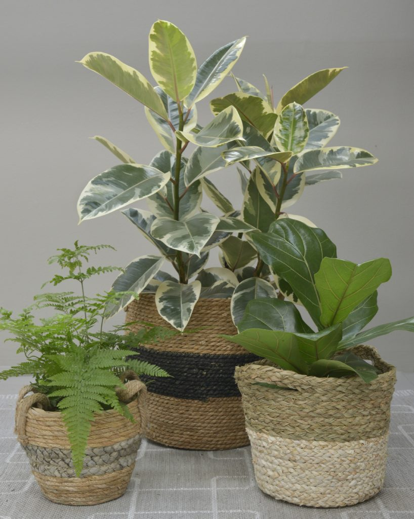 20 Trendiest Indoor Plants this Season – Lifestyle Home Garden