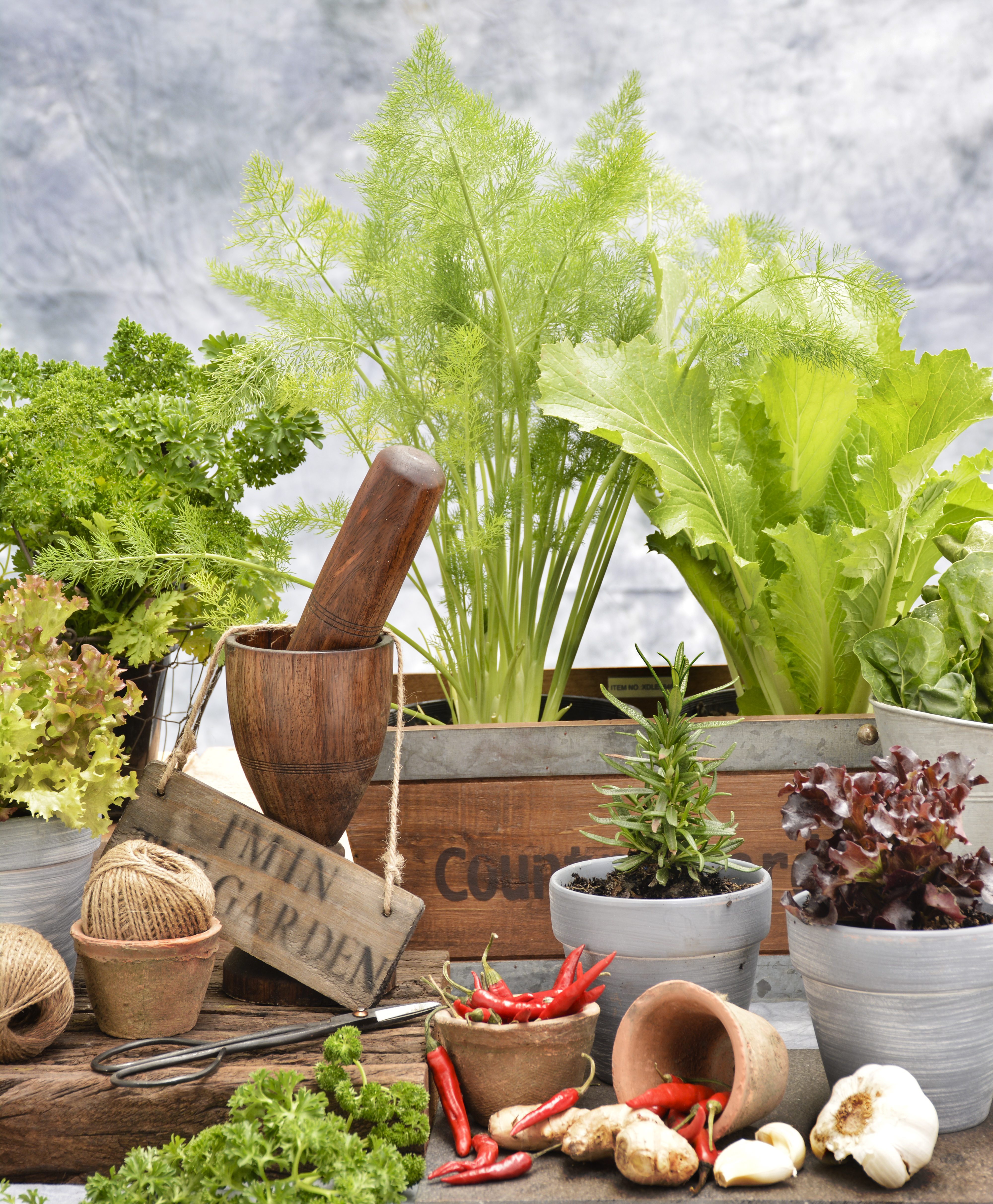 lifestyle home garden nursery plant shop vegetables fruit herbs grow your own edibles food fresh johannesburg gauteng