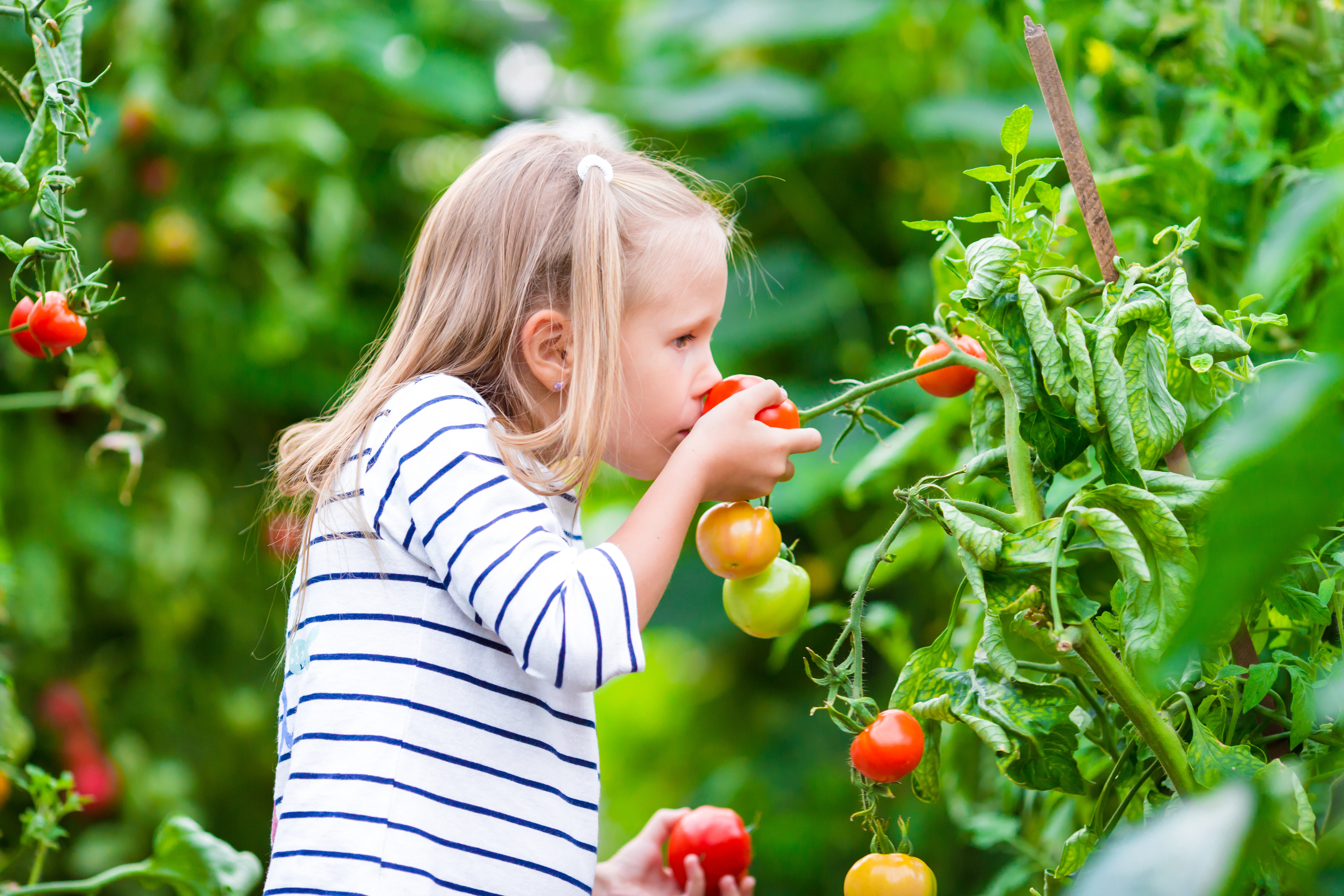 organic your lifestyle gardening for kids
