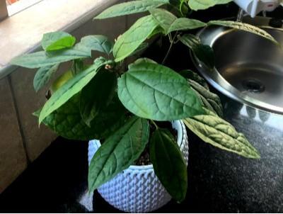 lifestyle home garden nursery plant shop guest gardener johannesburg gauteng