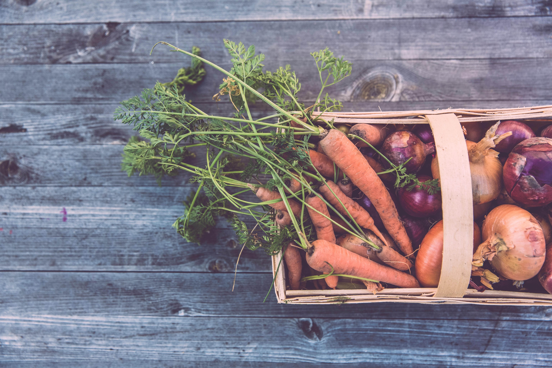 organic your lifestyle gardening lifestyle home garden nursery plant shop johannesburg gauteng