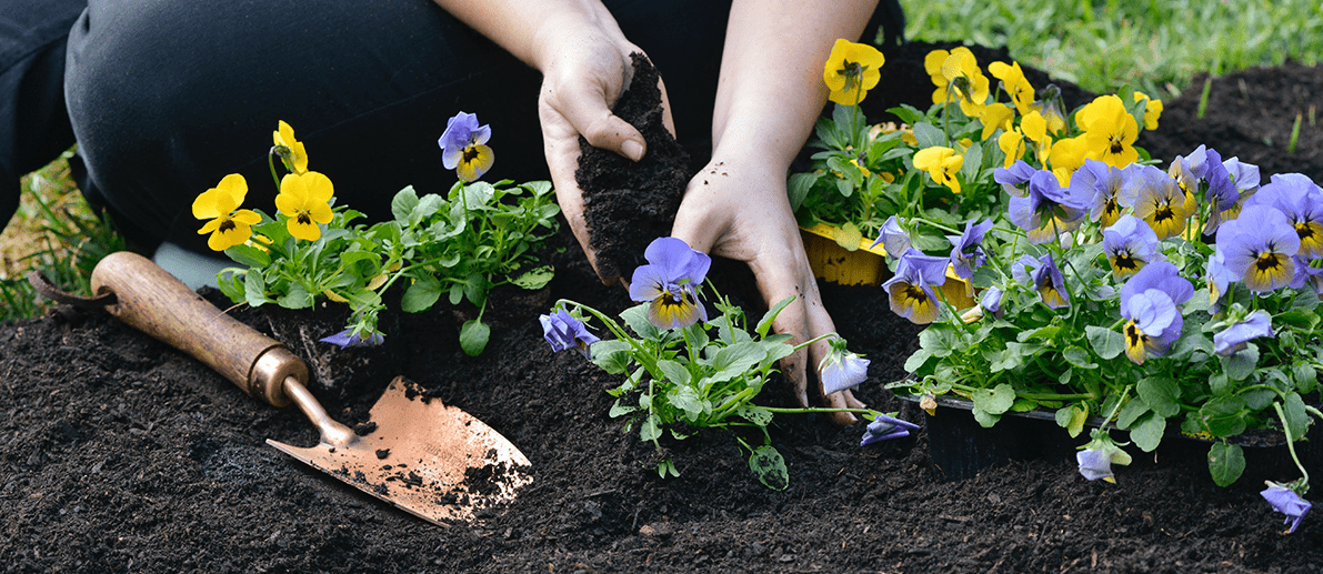 The value of soil Lifestyle Home Garden nursery plant shop gardening