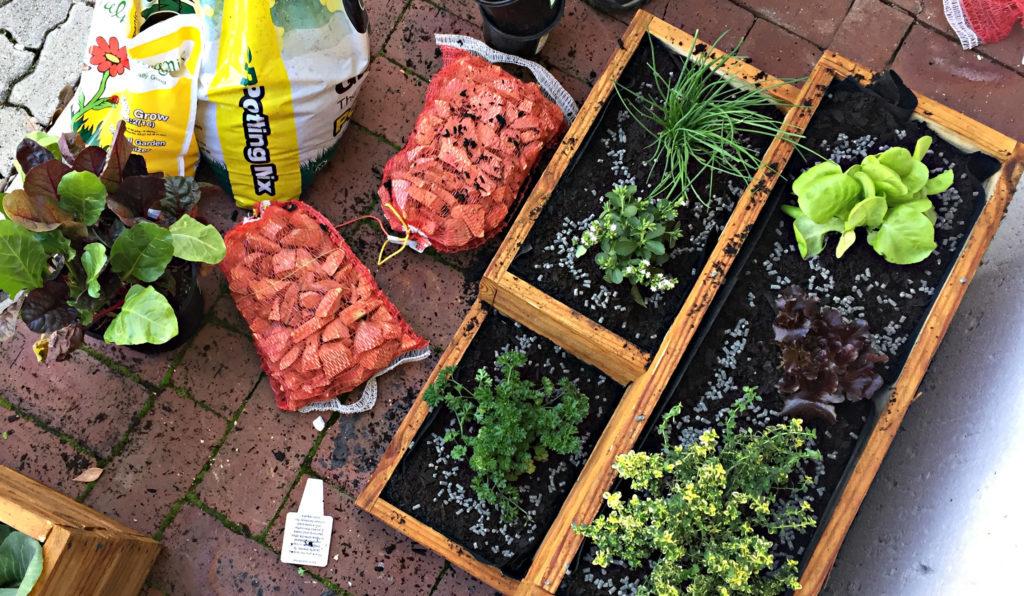 lifestyle home garden nursery plant shop container garden patio potager johannesburg gauteng