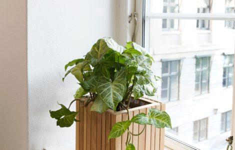 lifestyle home garden nursery plant shop johannesburg gauteng urban gardening greening urban city life plants