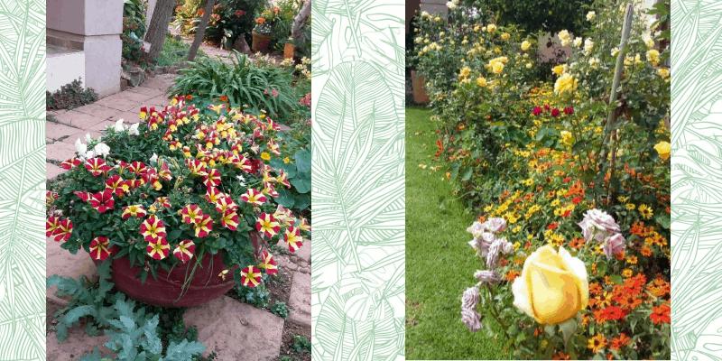 guest gardener lifestyle home garden johannesburg gauteng nursery plant shop trend trending south africa