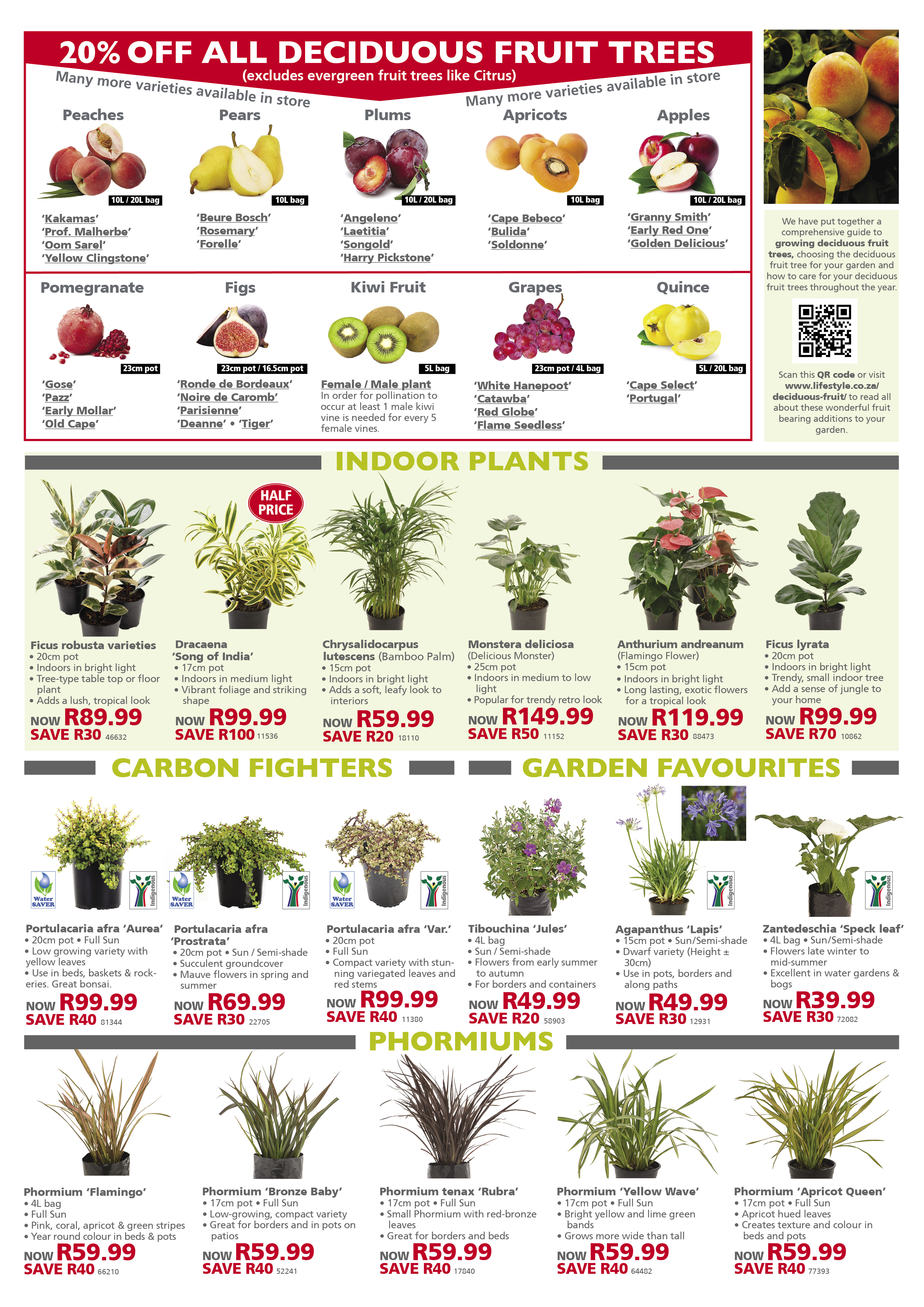 lifestyle home garden nursery plant shop leaflet