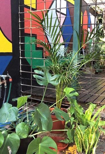 guest gardener lifestyle home garden nursery plant shop blog discover plantie plants johannesburg gauteng