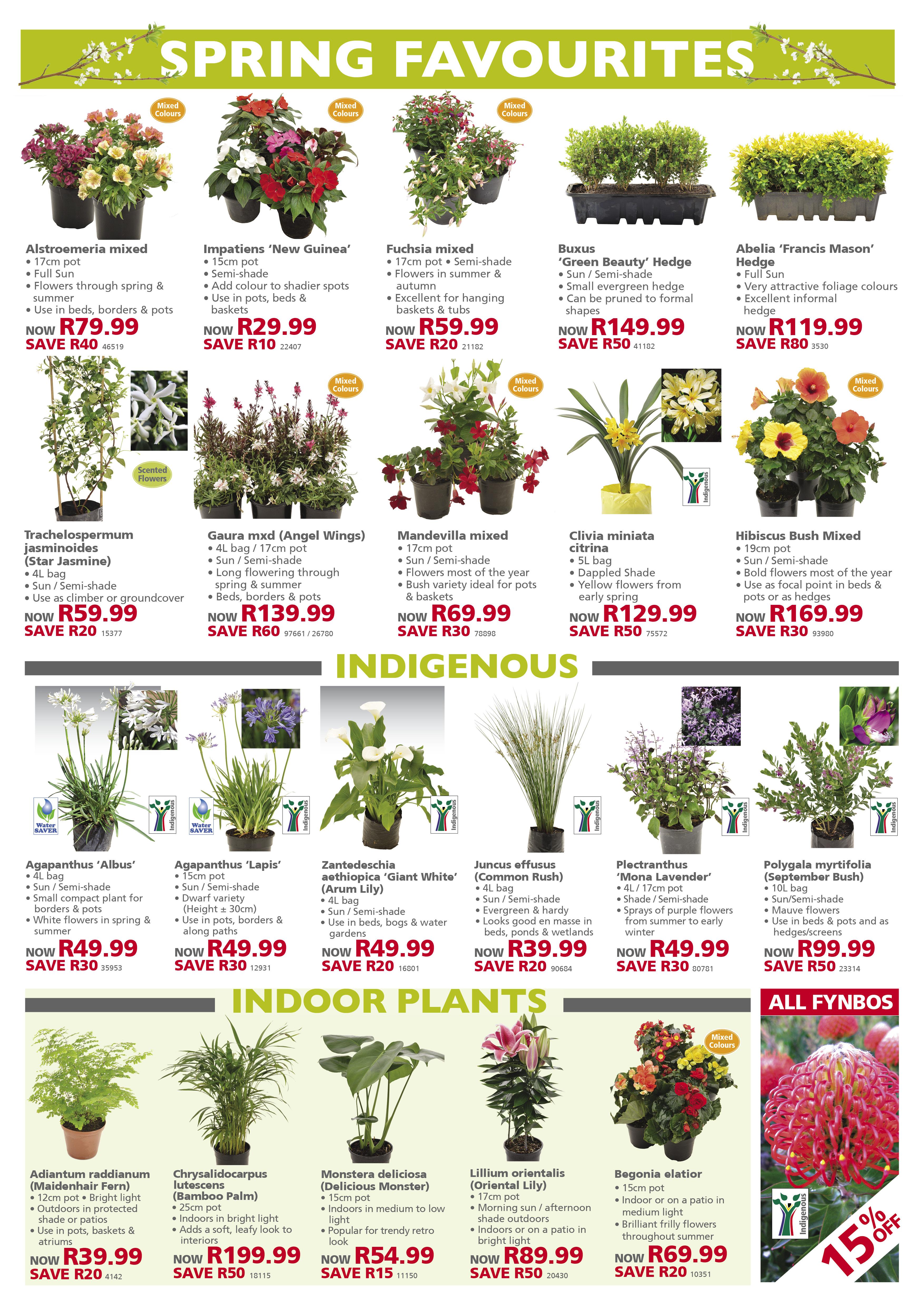 lifestyle home garden nursery plant shop leaflet specials spring