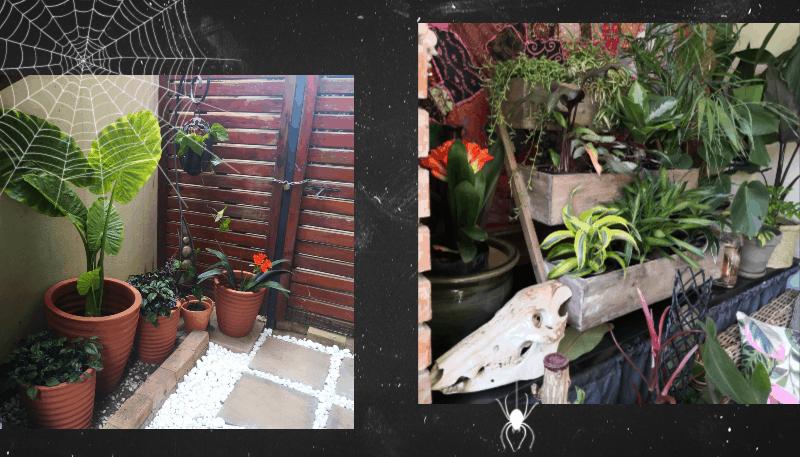 guest gardener lifestyle home garden nursery plant shop halloween indoor plants