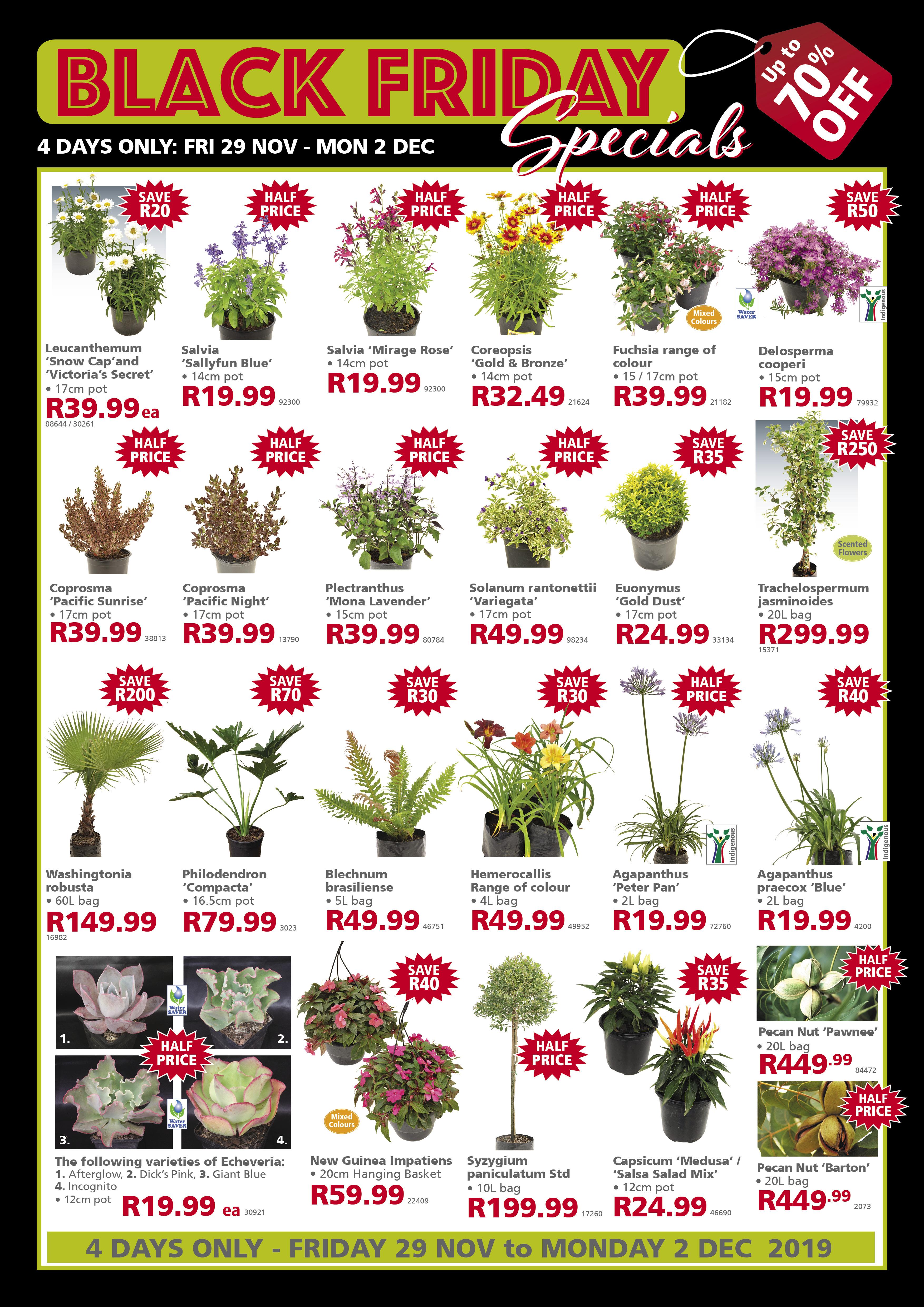 lifestyle home garden nursery plant shop johannesburg gauteng black friday scratch and win competition