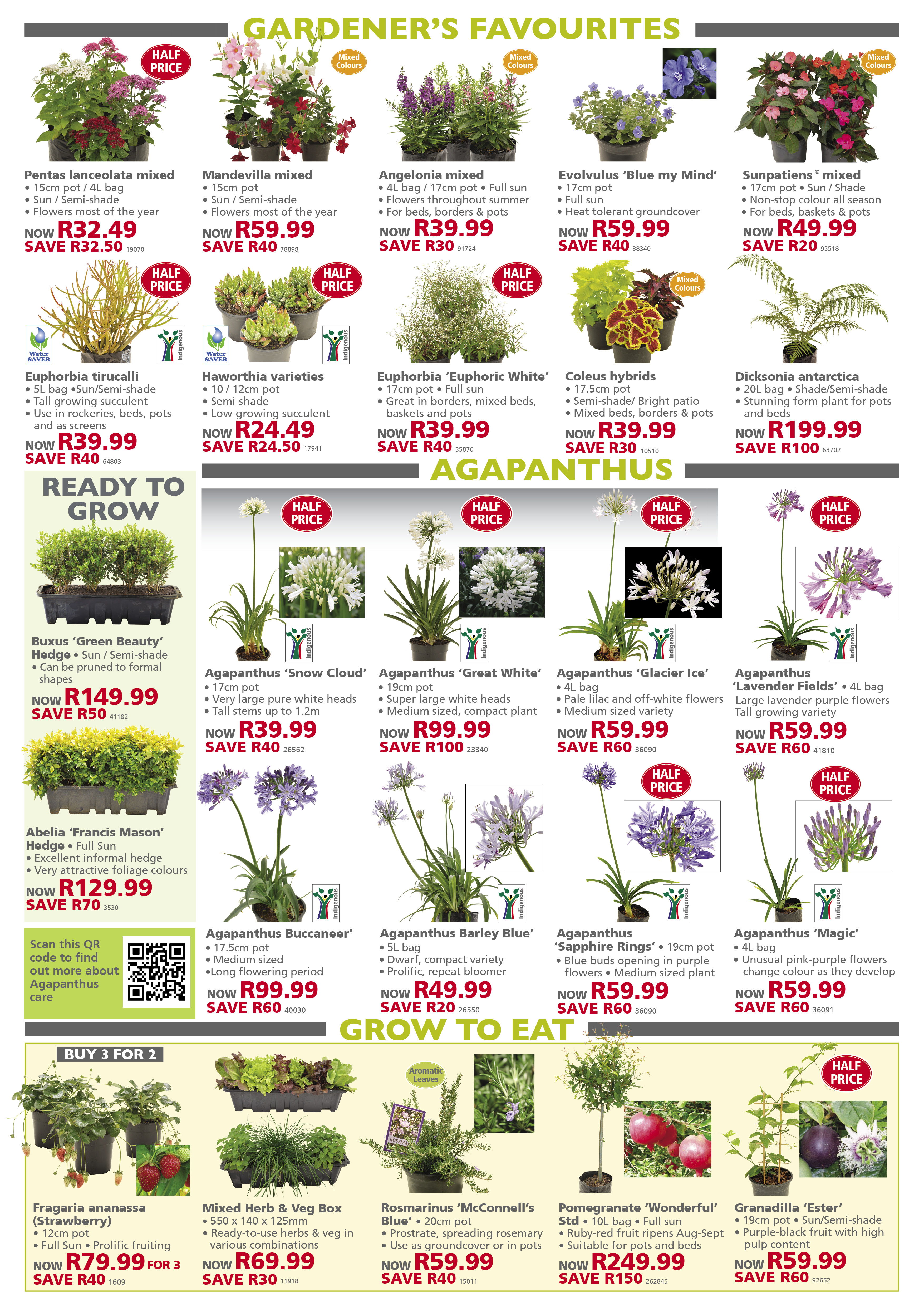 lifestyle home garden specials festive season christmas nursery plant shop