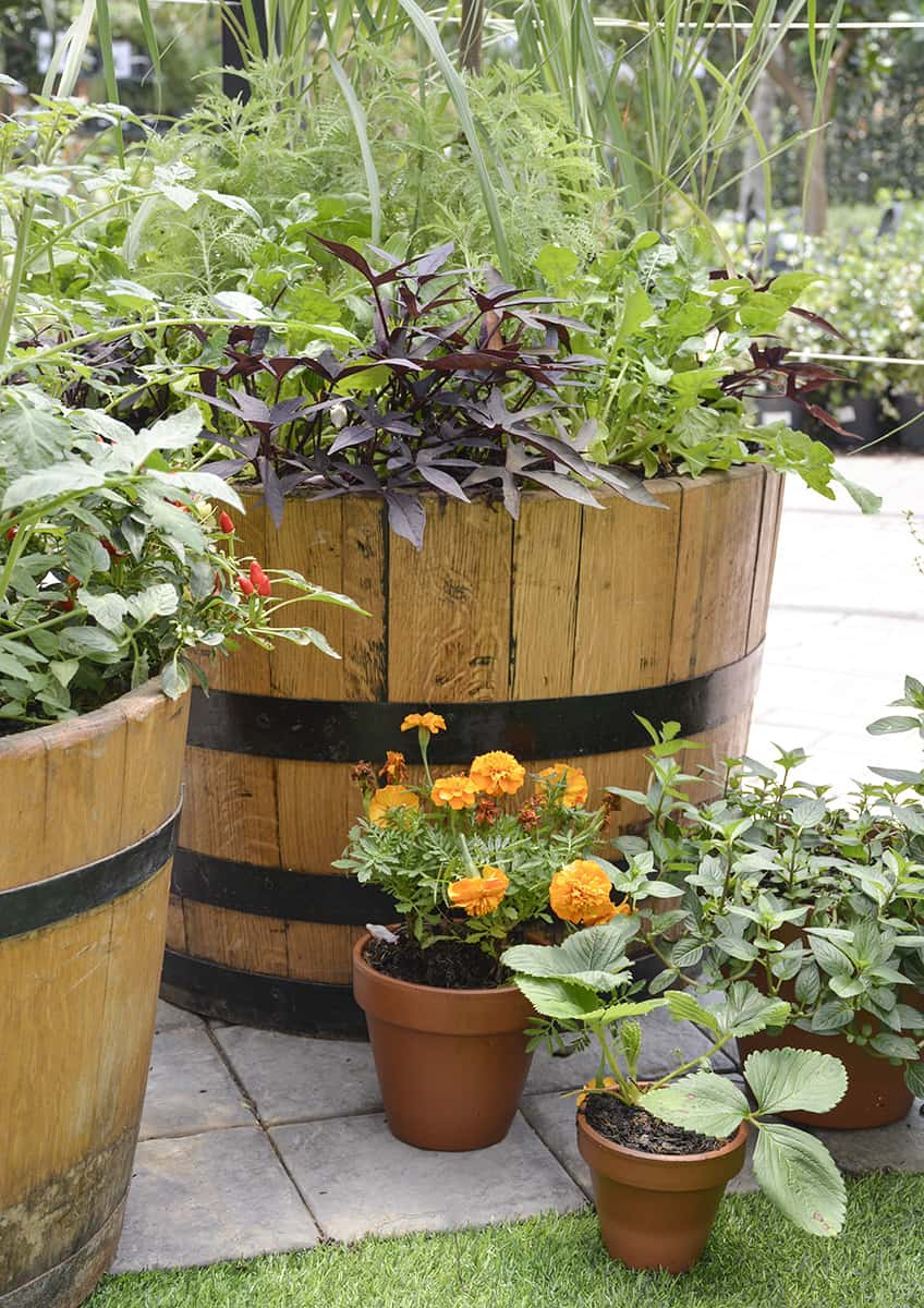 Urban Greenie  Patio Gardening with Lifestyle Home Garden