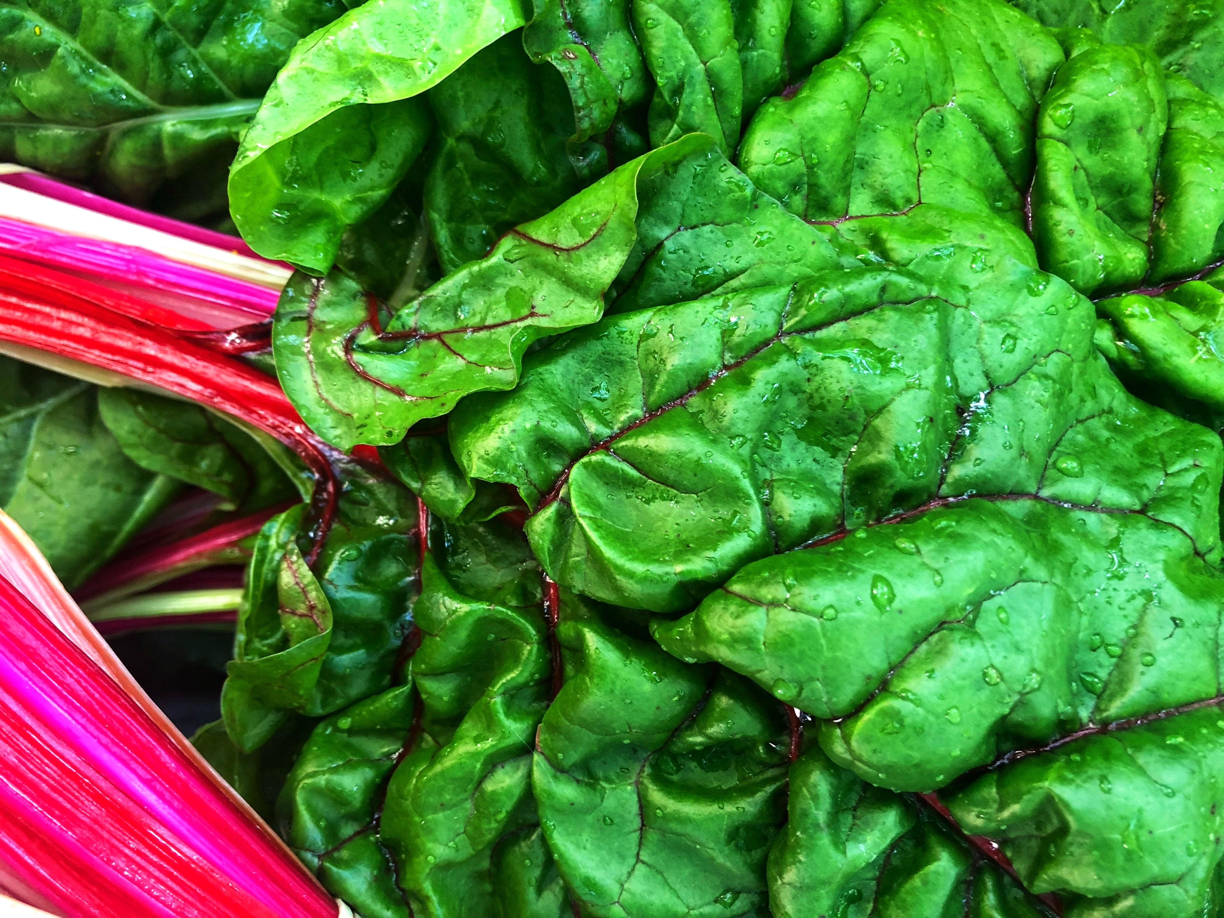lifestyle home garden nursery plant shop johannesburg gauteng swiss chard vegetables