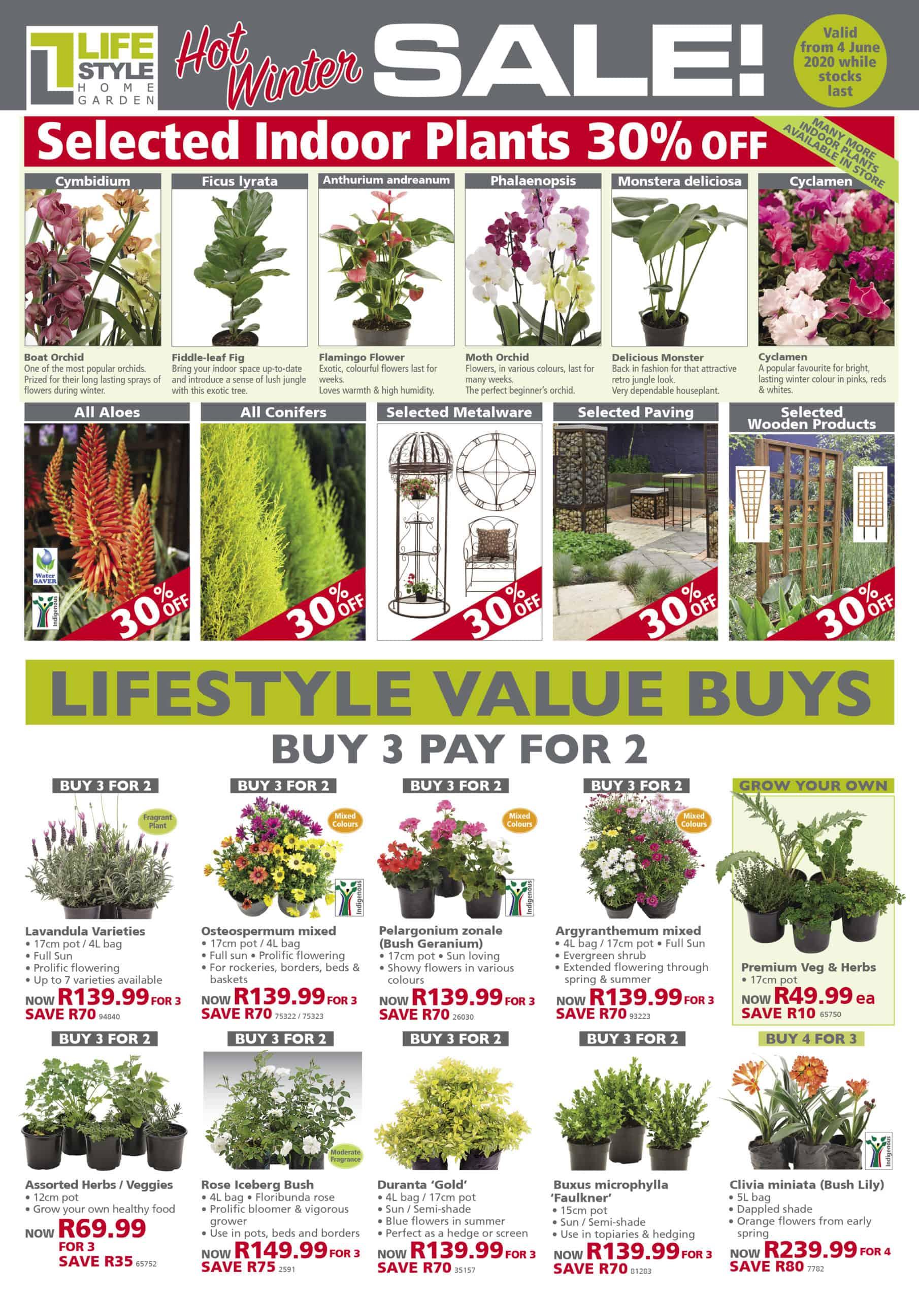 lifestyle home garden specials winter june indoor plant sale value shop nursery johannesburg gauteng