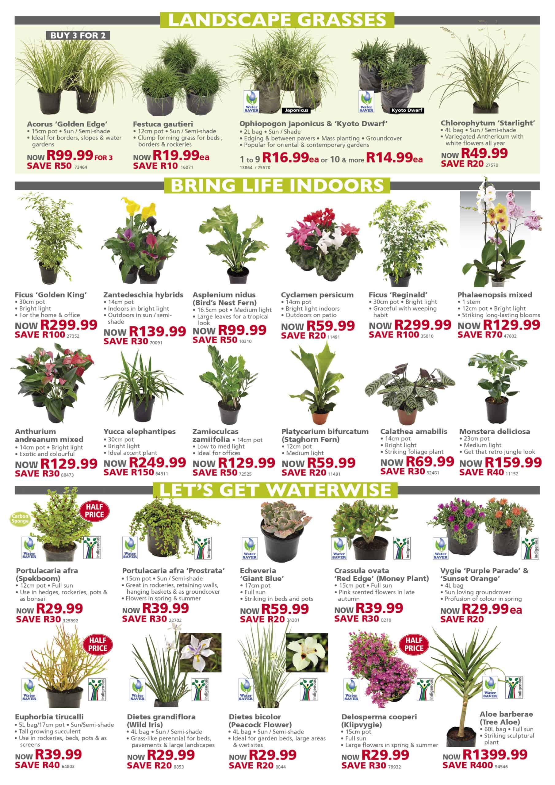 Lifestyle specials home garden compost lawn dressing top soil deals special johannesburg promotion nursery plant shop gauteng