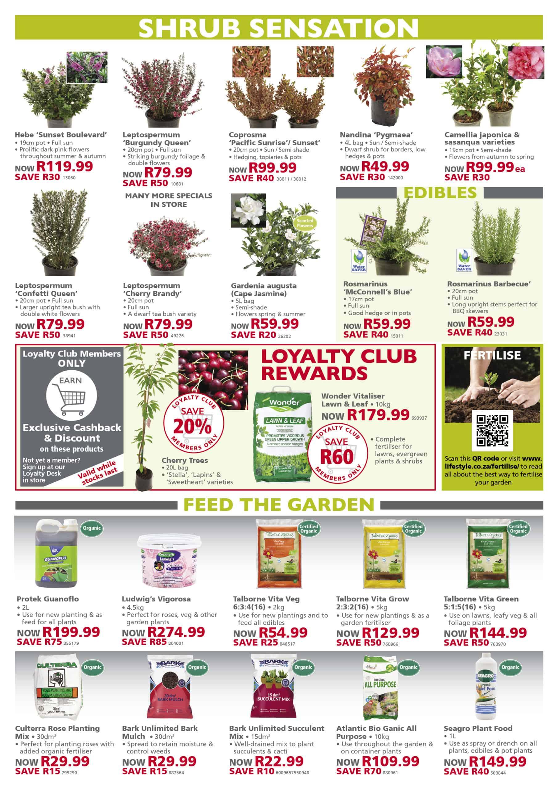 lifestyle home garden nursery plant shop specials winter august gardening south africa johannesburg gauteng indoors indoor trends trending landscaping