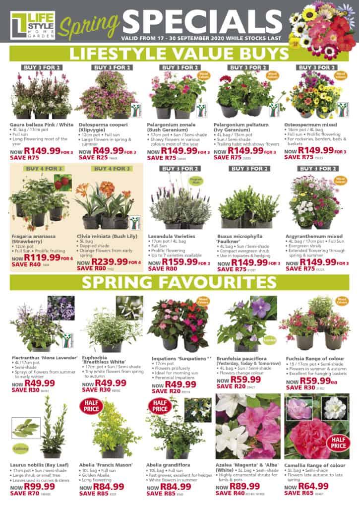 lifestyle home garden spring specials nursery plant shop johannesburg