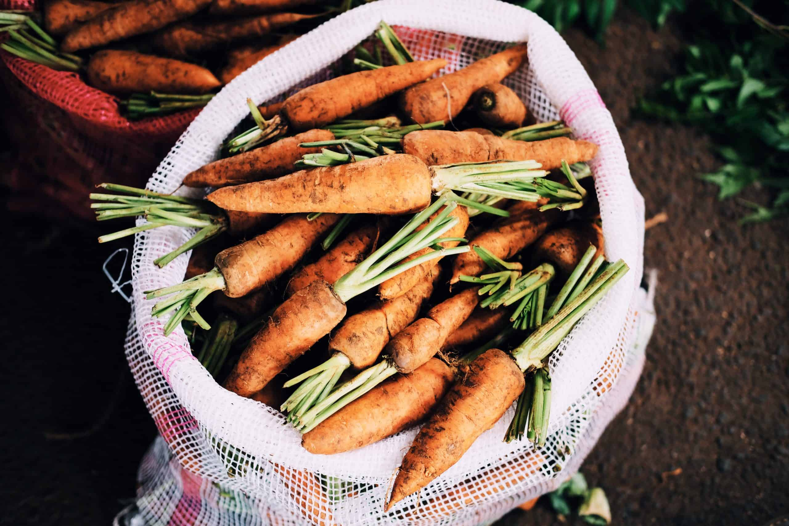 vegetables to plant in winter
