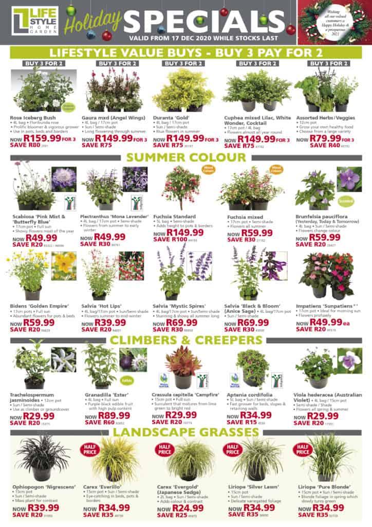 Specials lifestyle home garden december christmas summer gardening hub johannesburg gauteng best nursery plant shop