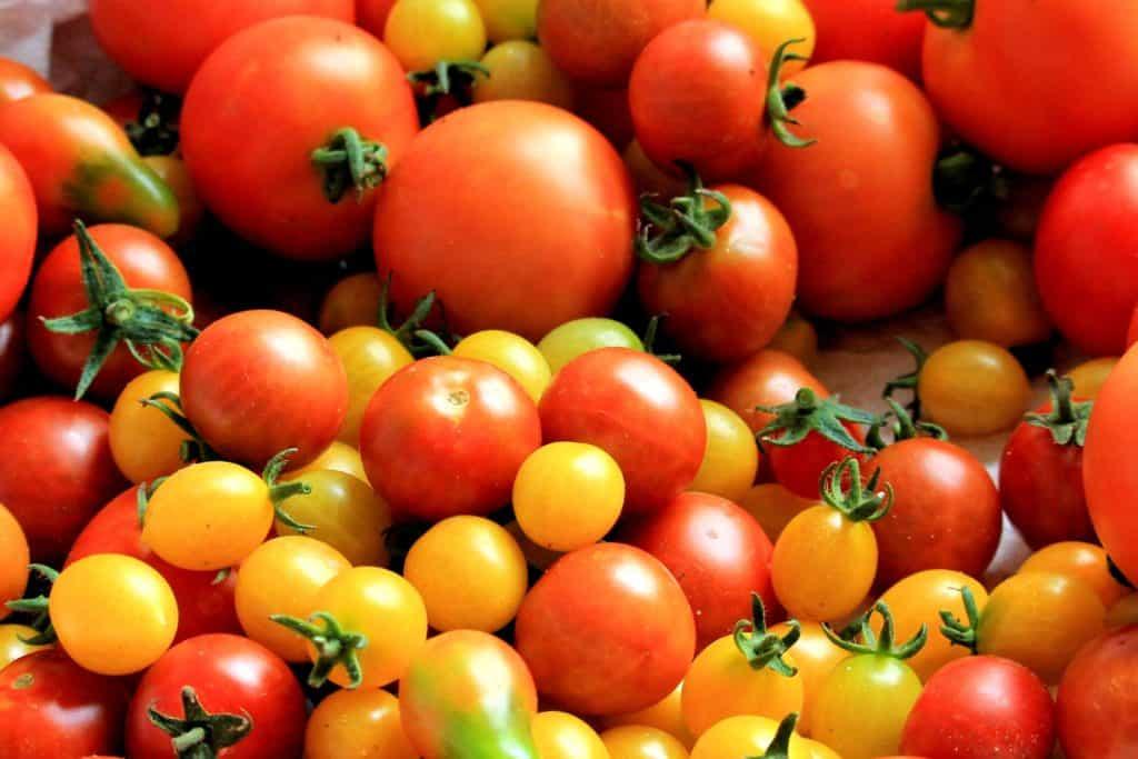 lifestyle home garden baby mini veg vegetables 2020 garden nursery plant shop johannesburg gauteng permaculture companion harvest seasonal