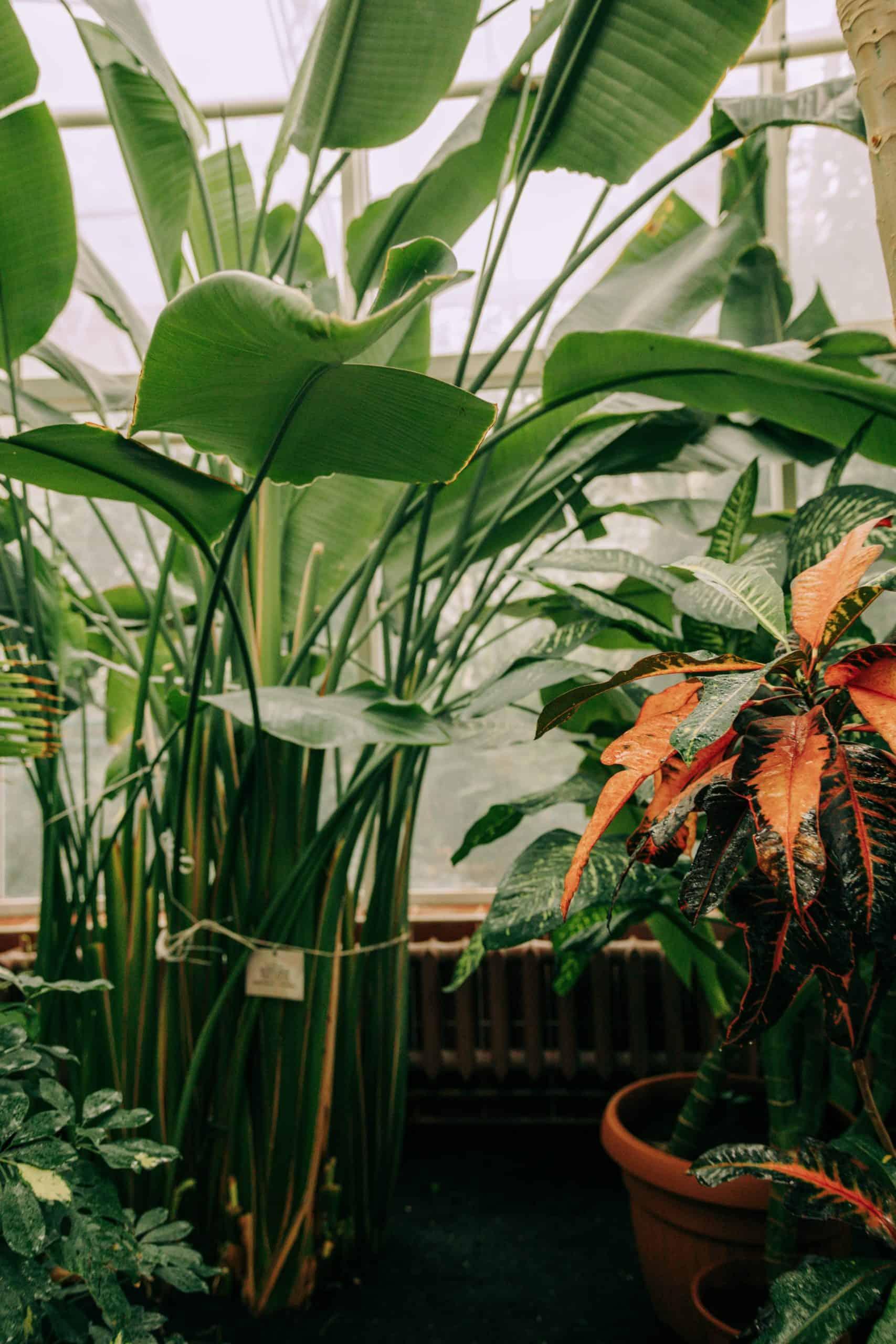 lifestyle home garden trend report 2021 garden nursery plant shop johannesburg gauteng pantone fashion edit decor colour bloom flowers