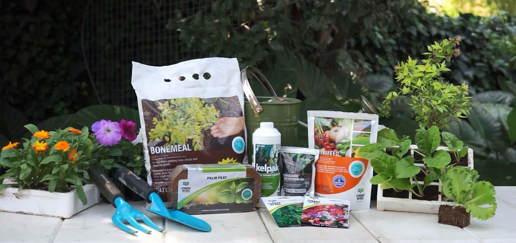 starke ayres lifestyle home garden supplier quality seeds growing medium hydrocache hydroponics plennegy gardening gardens love growing south africa johannesburg gauteng