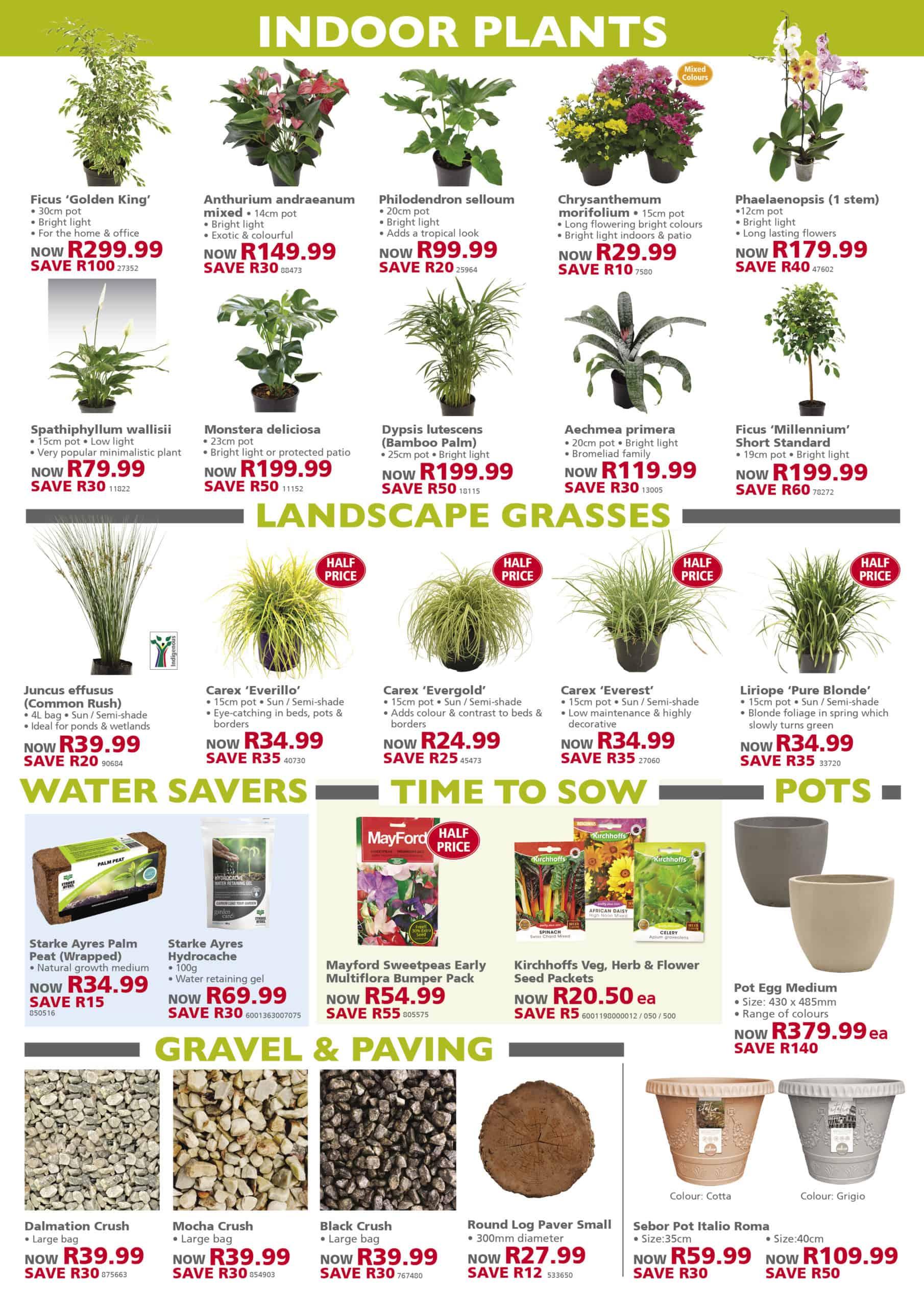 lifestyle home garden specials autumn roses fynbos value garden show competition talborne larger than 2021 march