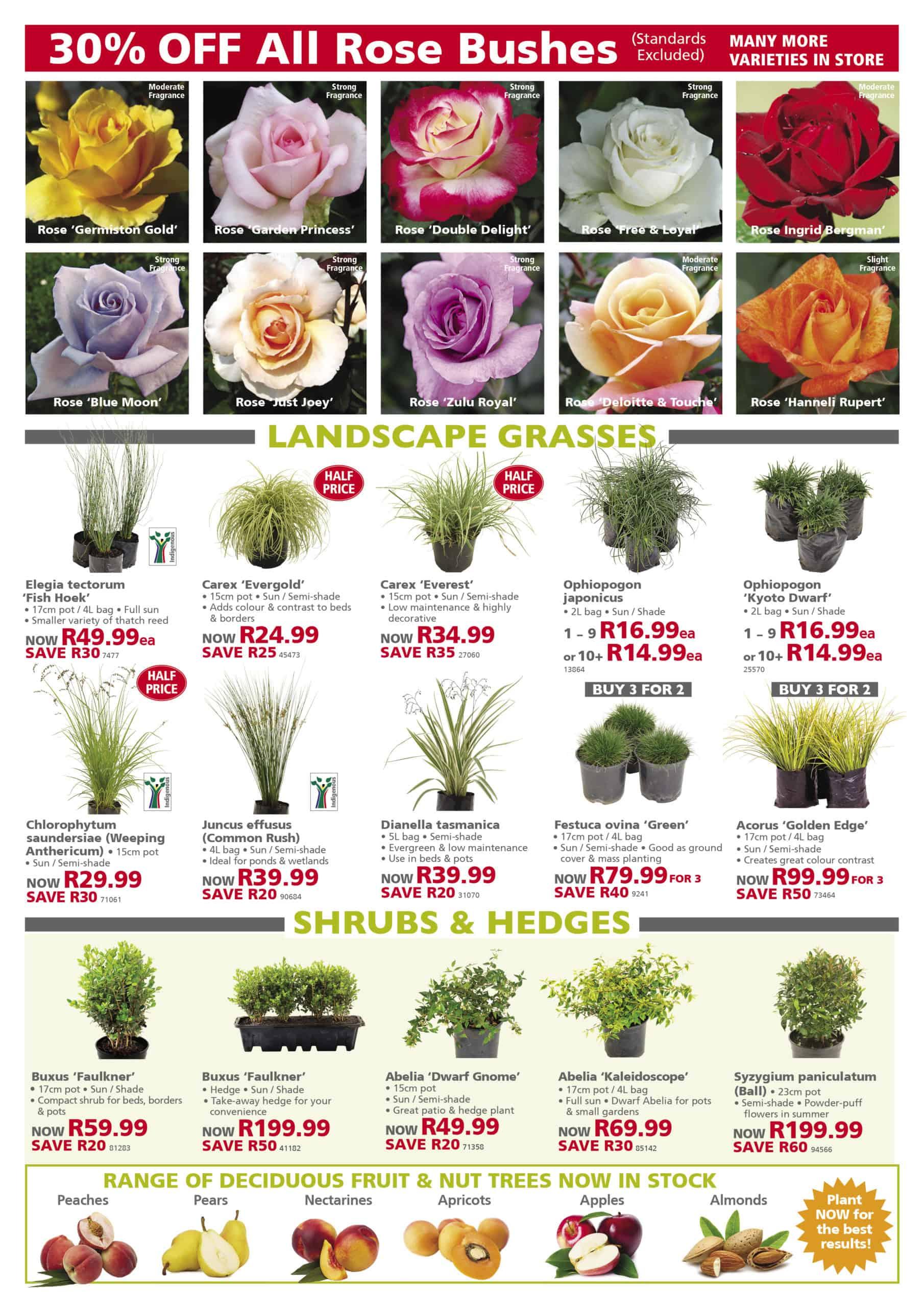 lifestyle home garden johannesburg gauteng plants roses specials autumn pots urban small buy
