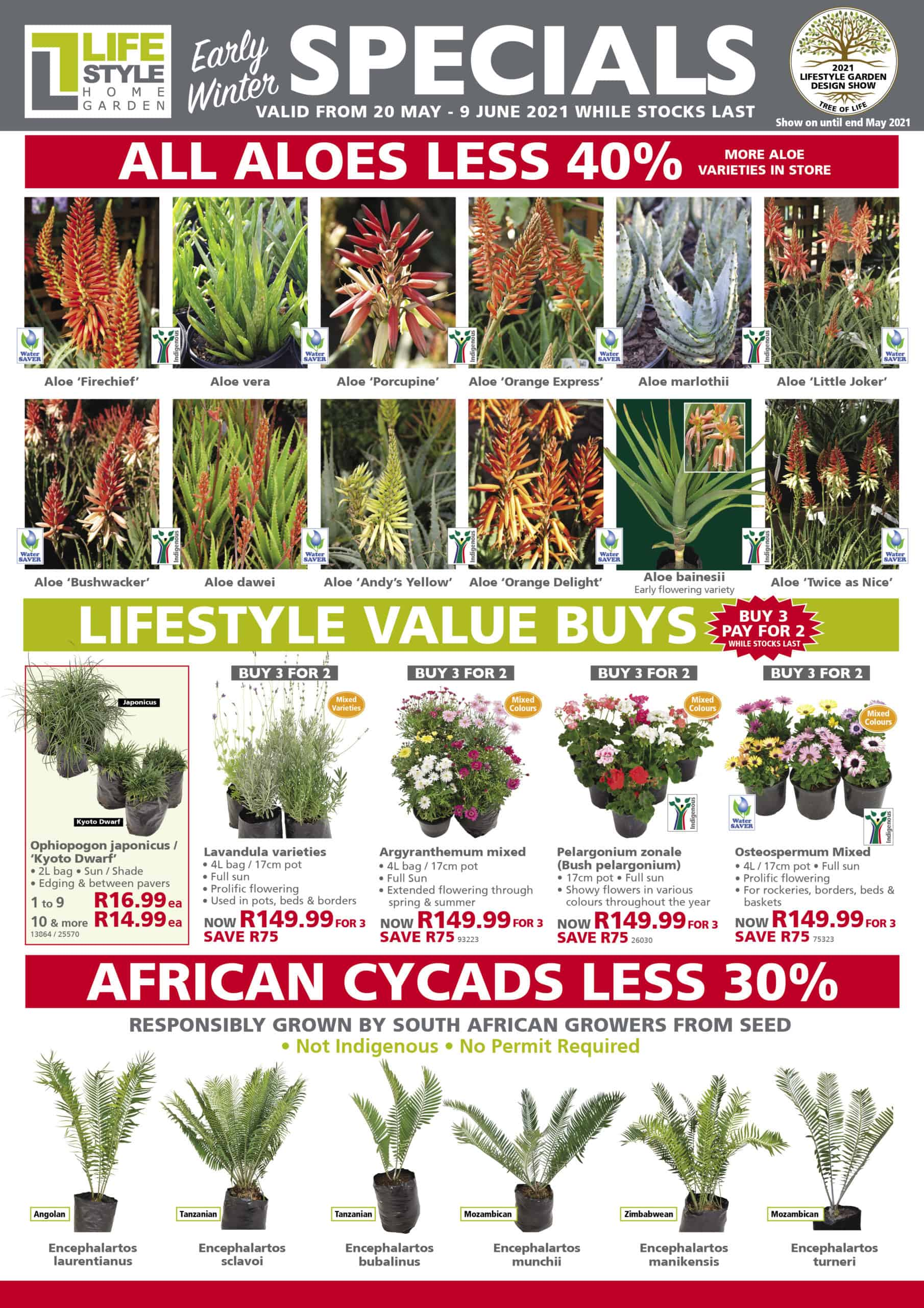lifestyle home garden indoor plants grow your own winter specials landscaping grasses outdoorscaping mica ferns plant pots indigenous waterwise south africa johannesburg